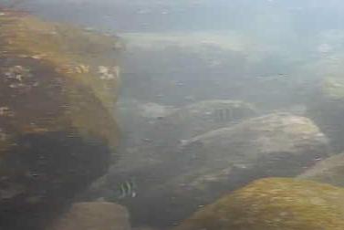 御幸の浜突堤 水中写真