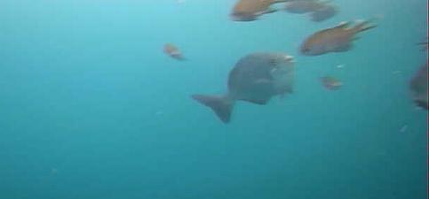 安良里港 水中写真07