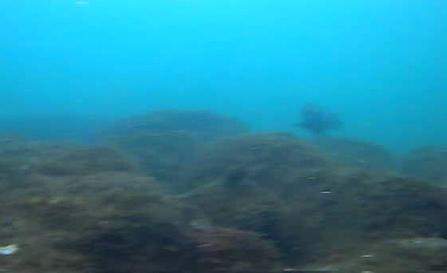 安良里港 水中写真04
