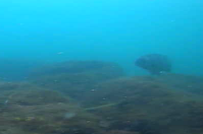 安良里港 水中写真09