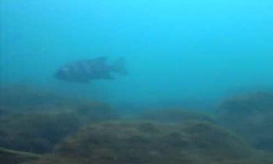 安良里港 水中写真03
