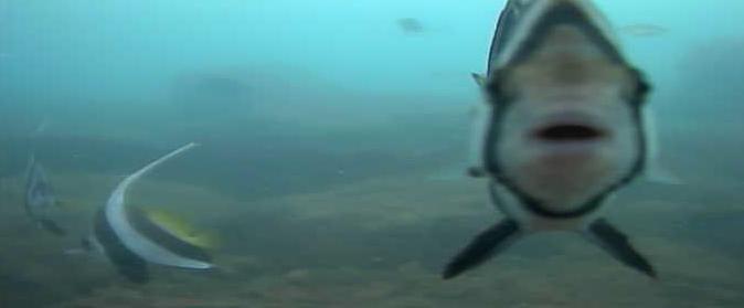 コバルト堤防 水中写真02