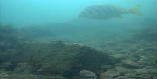 コバルト堤防 水中写真03