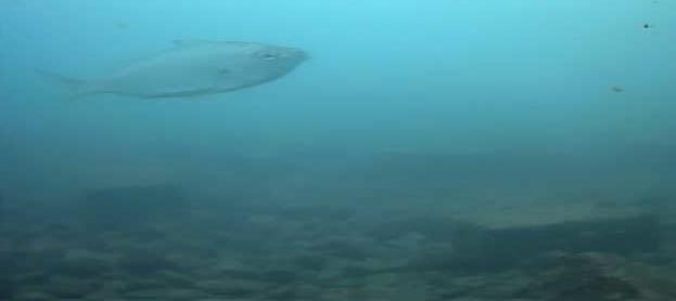 コバルト堤防 水中写真08