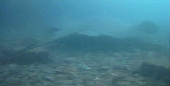 コバルト堤防 水中写真05
