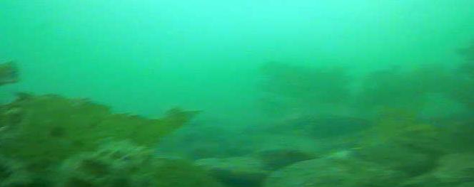 沼津港 海底