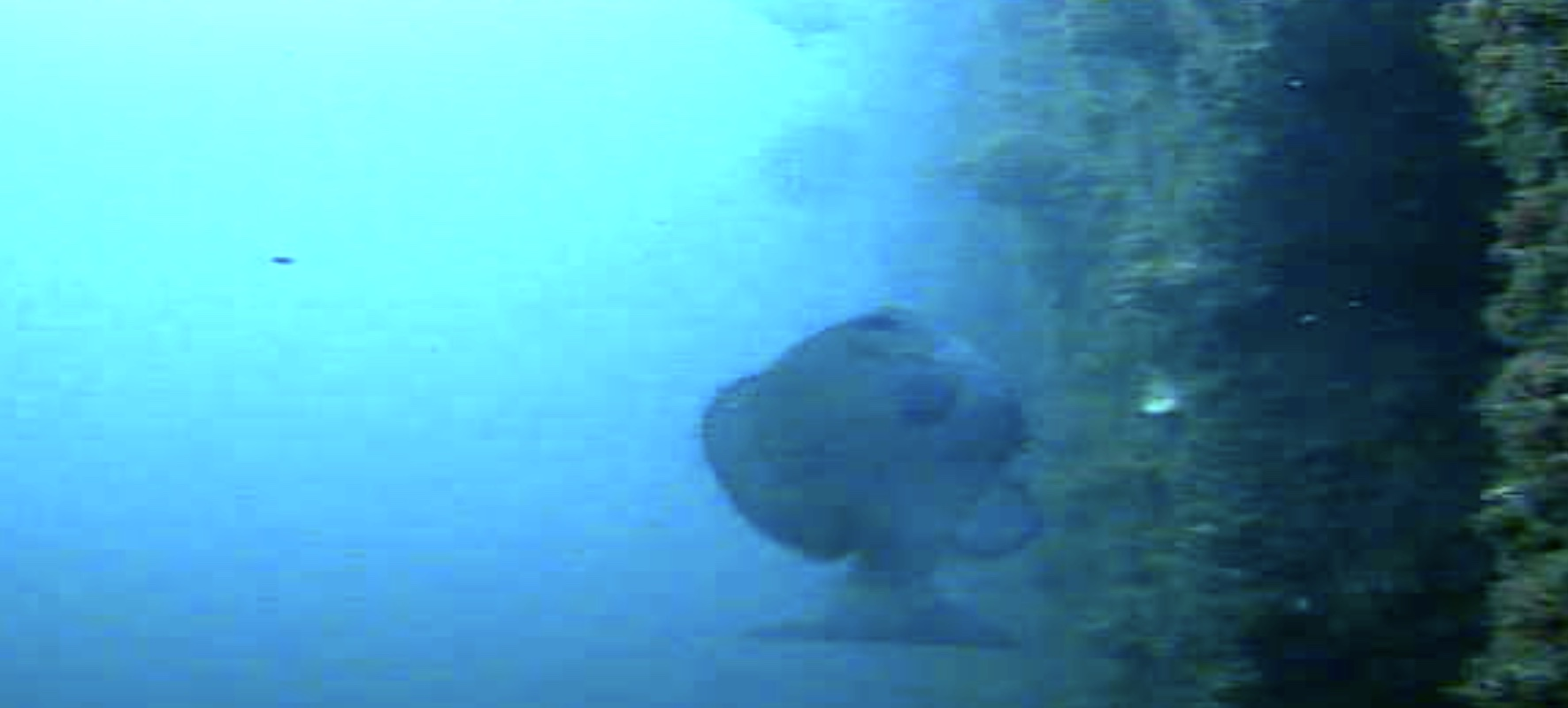 長崎マリア像周辺 水中写真02