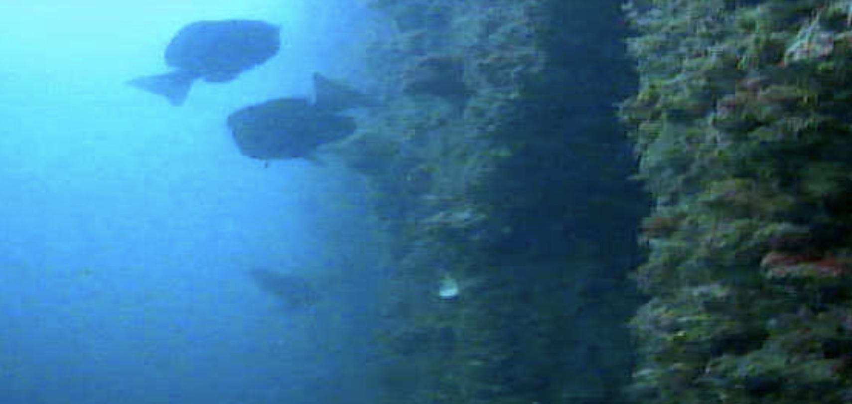 長崎マリア像周辺 水中写真01