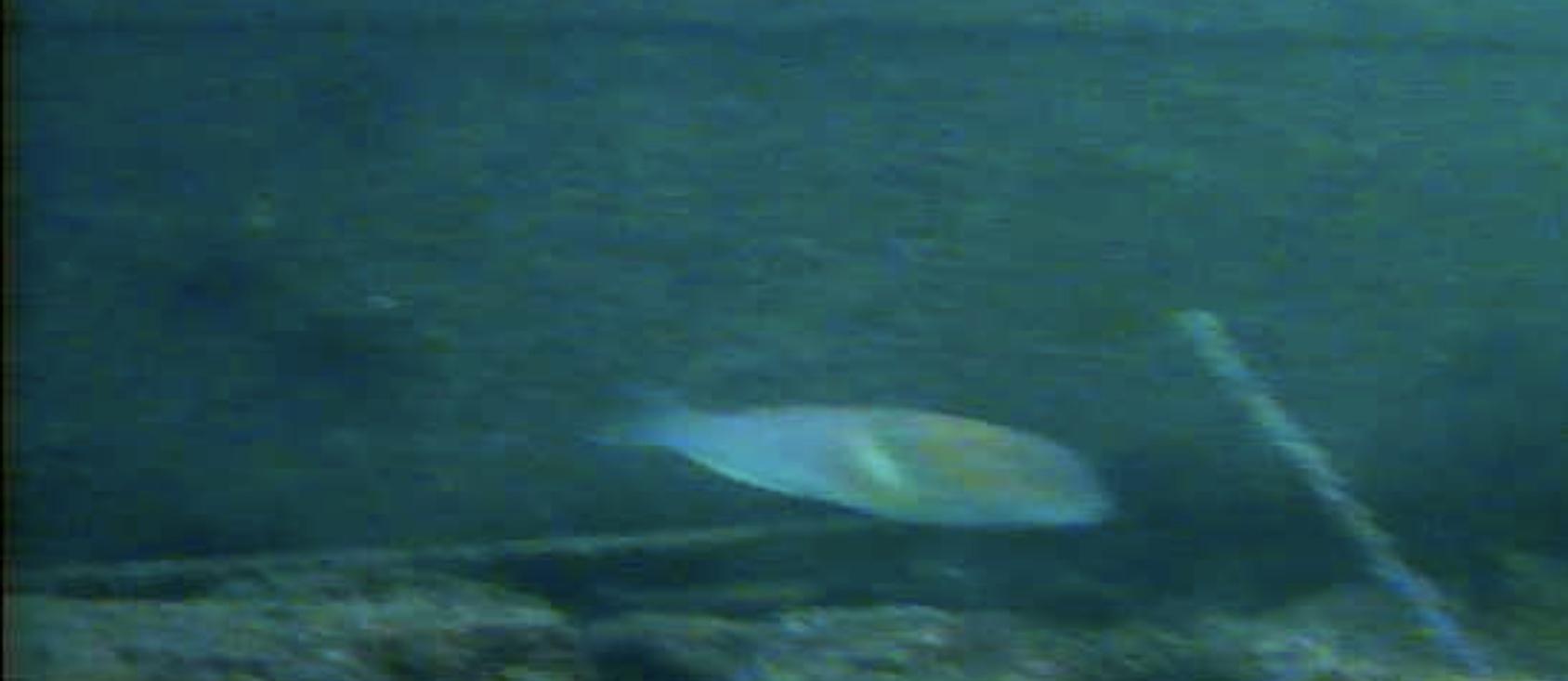 長崎マリア像周辺 水中写05真