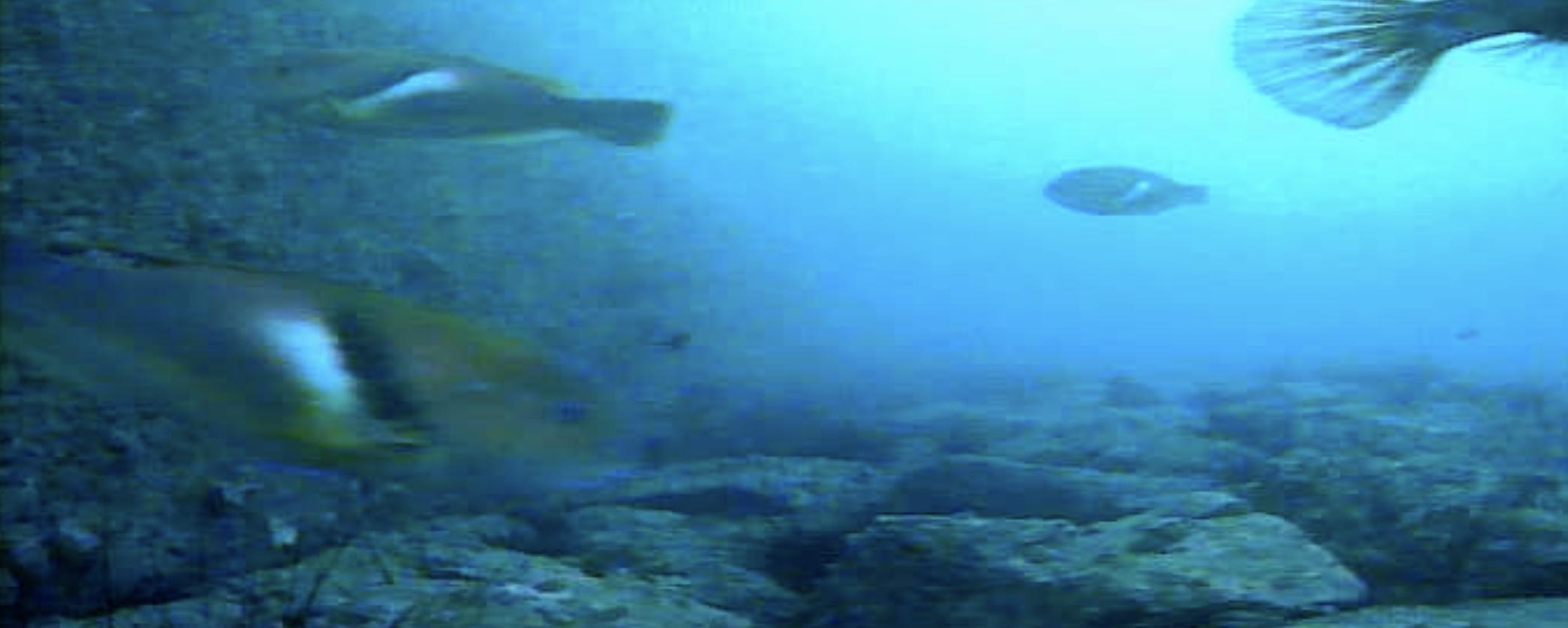 長崎マリア像周辺 水中写真06