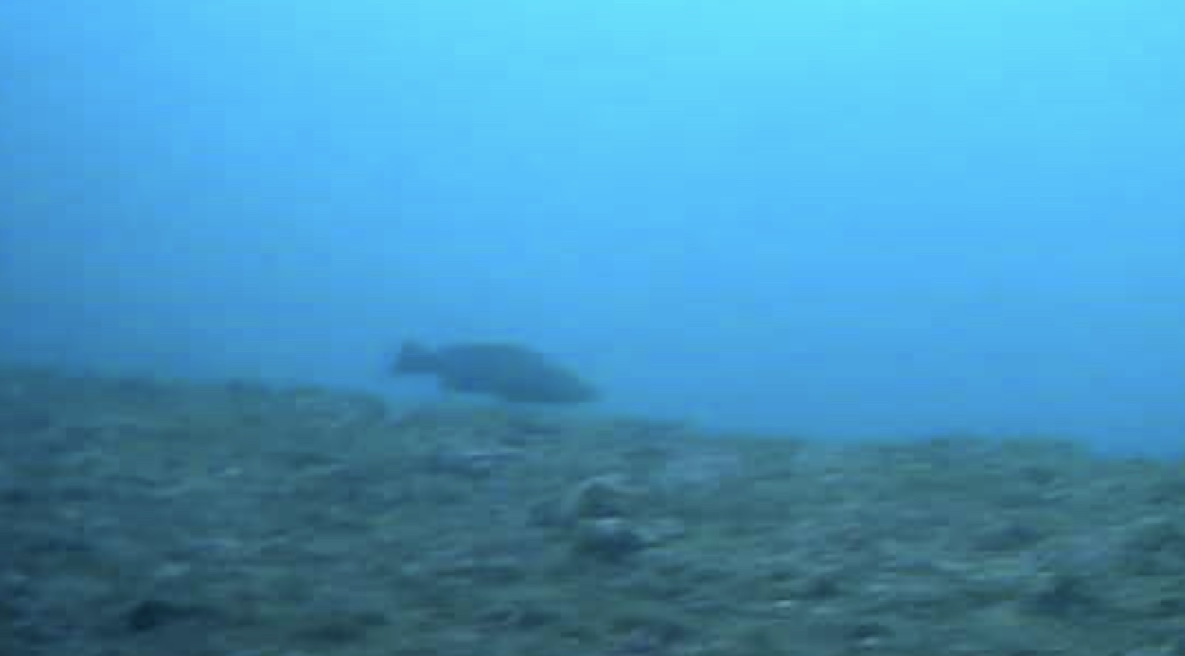 大洋食品前護岸水中写真03