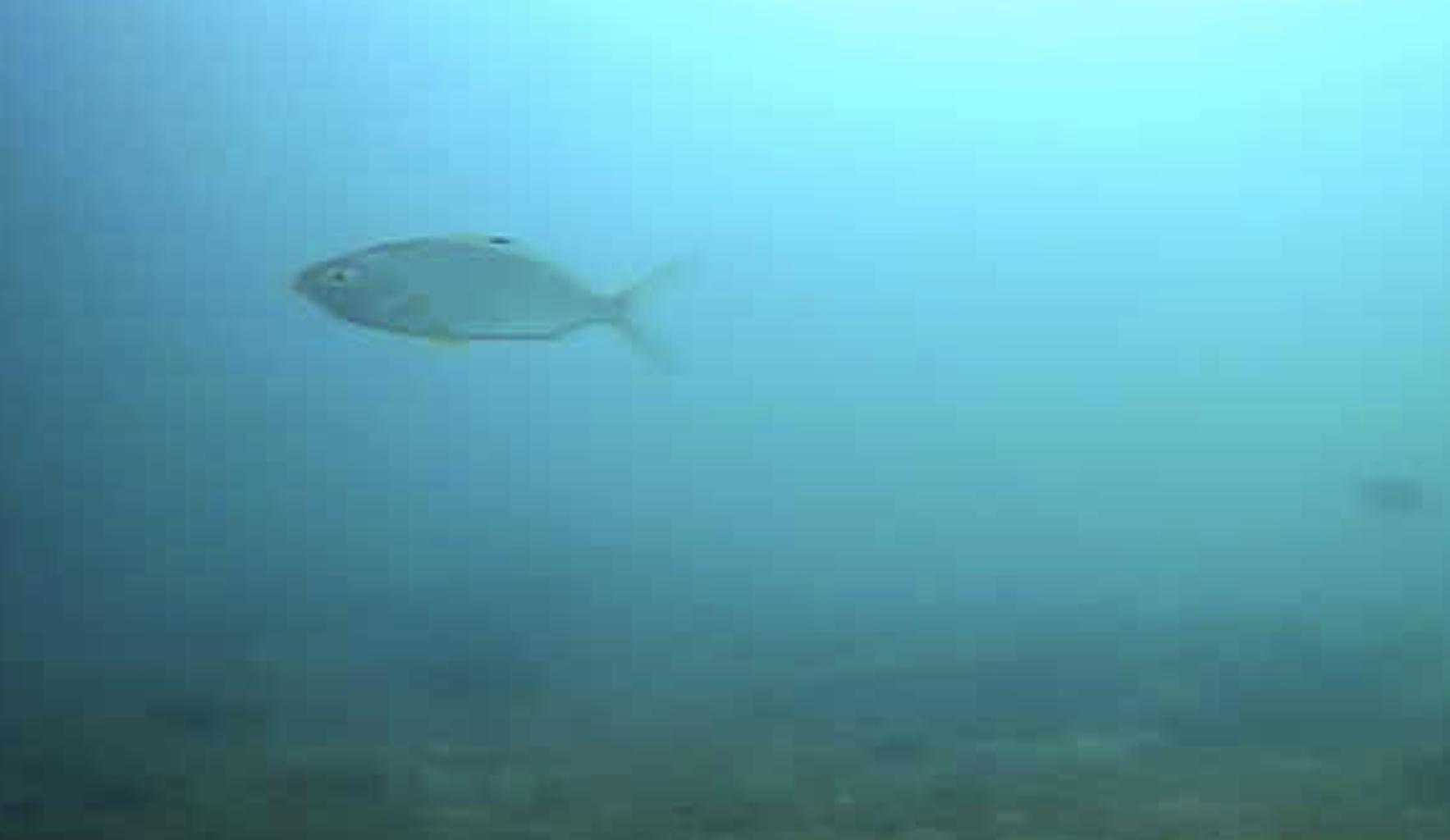 大洋食品前護岸水中写真05
