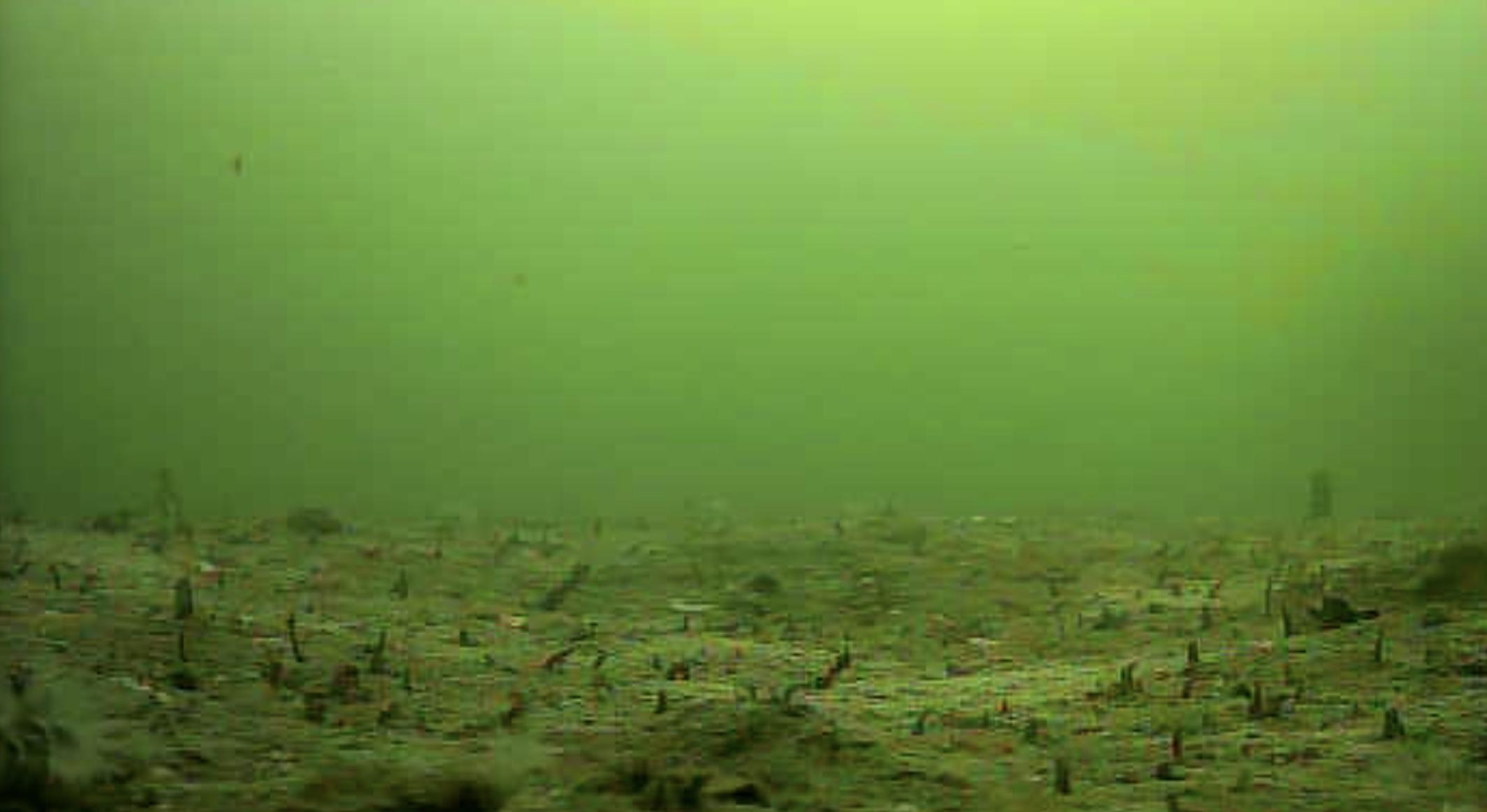 緑が浜エコパーク 水中写真海底