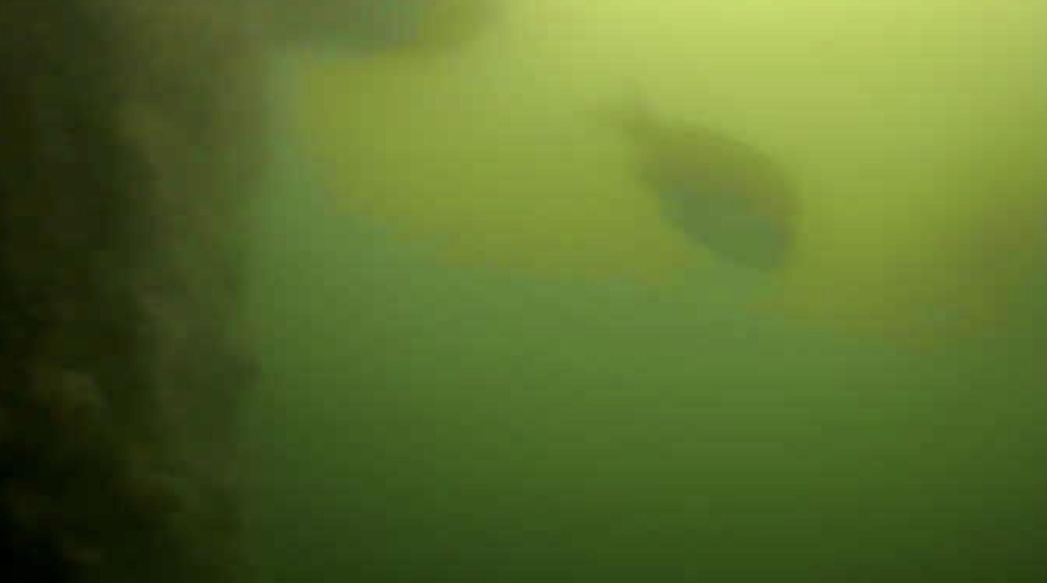 緑が浜エコパーク 水中写真クロダイ