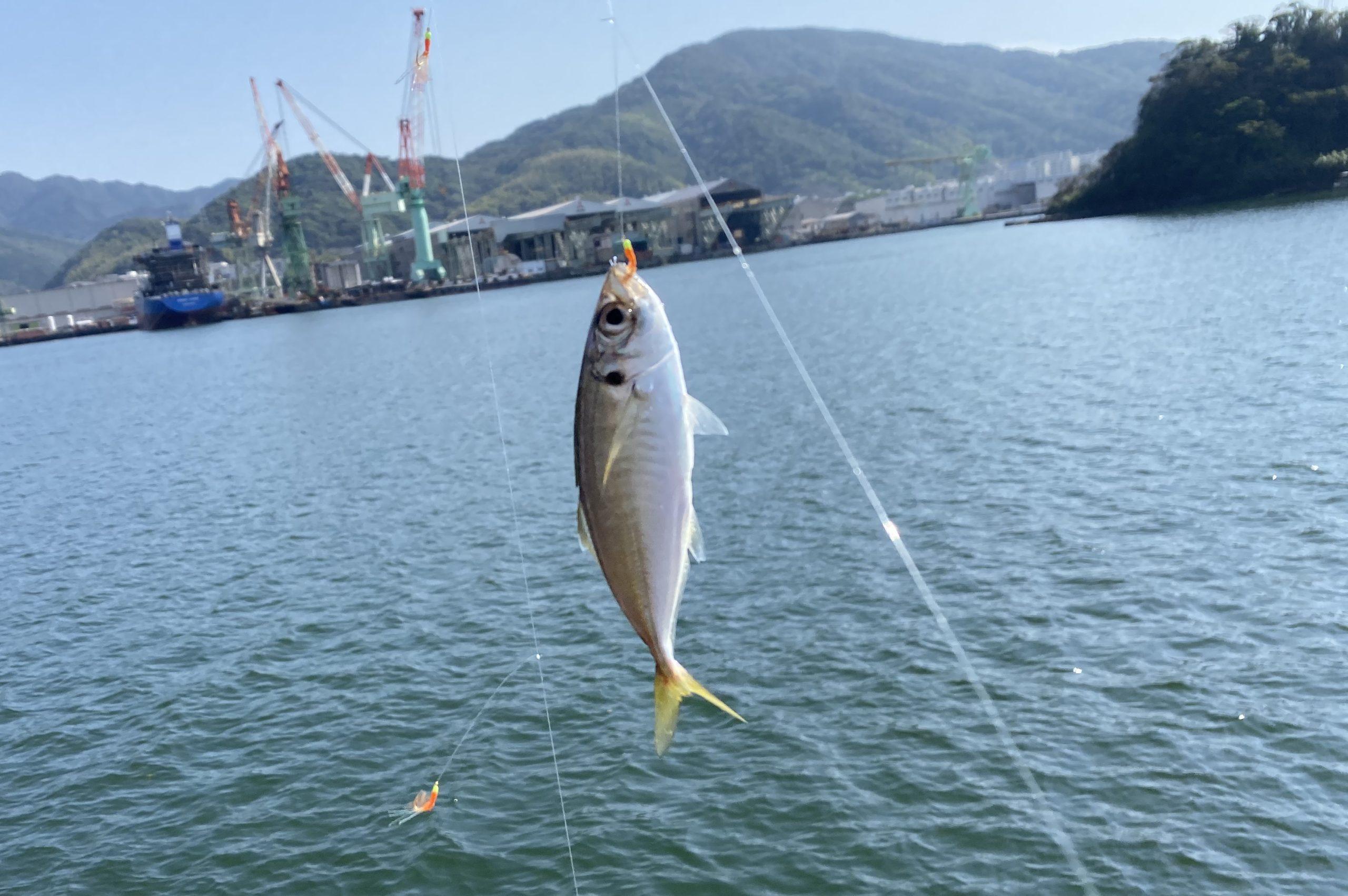 九州スチールセンター横釣果アジ02