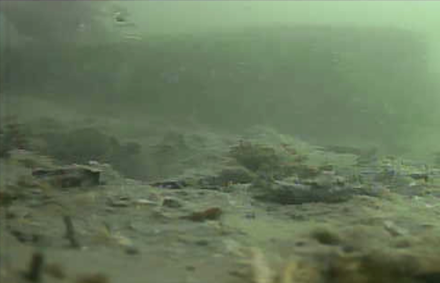 高松G地区 水中写真 マダイ