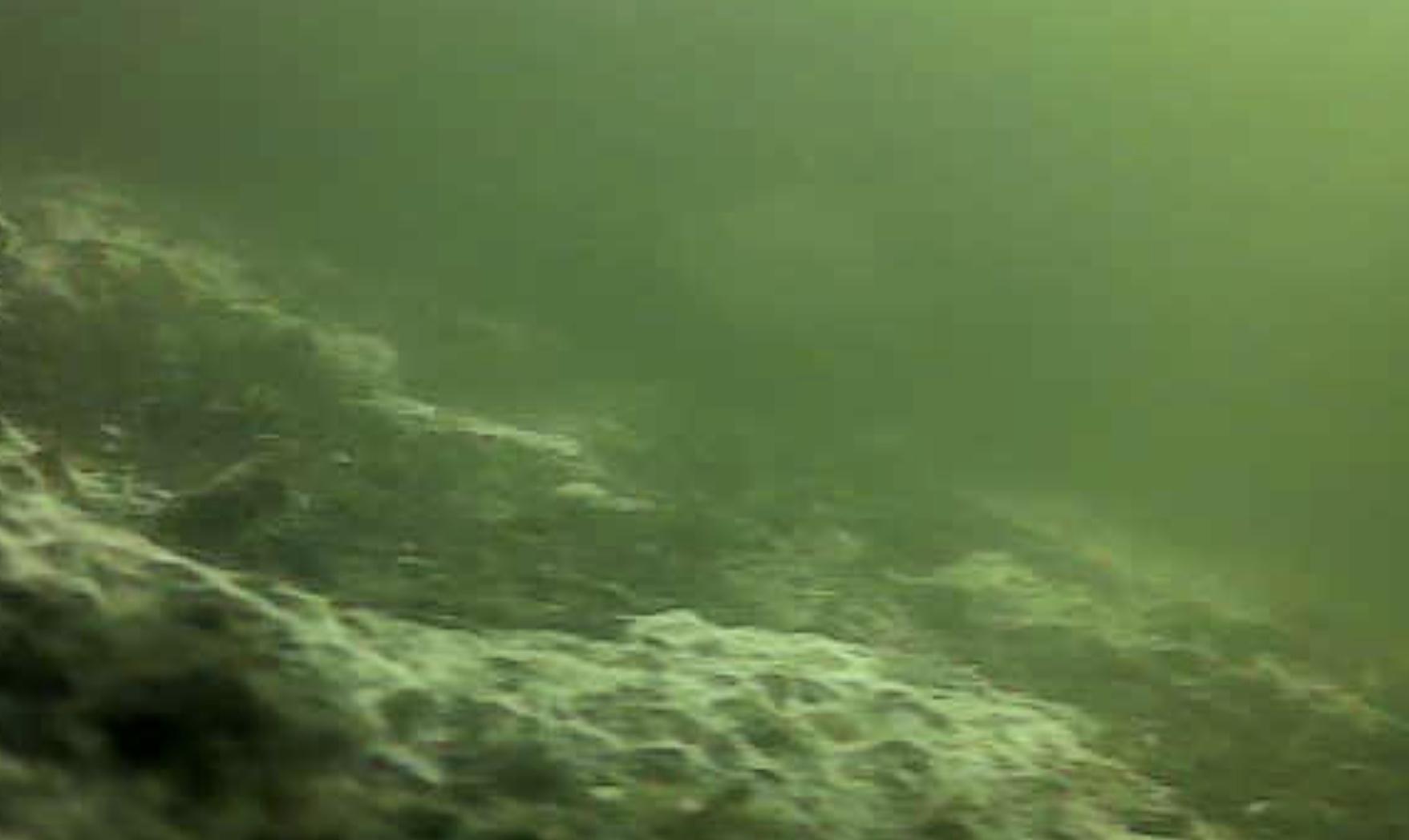 浜寺公園 水中写真 チヌ