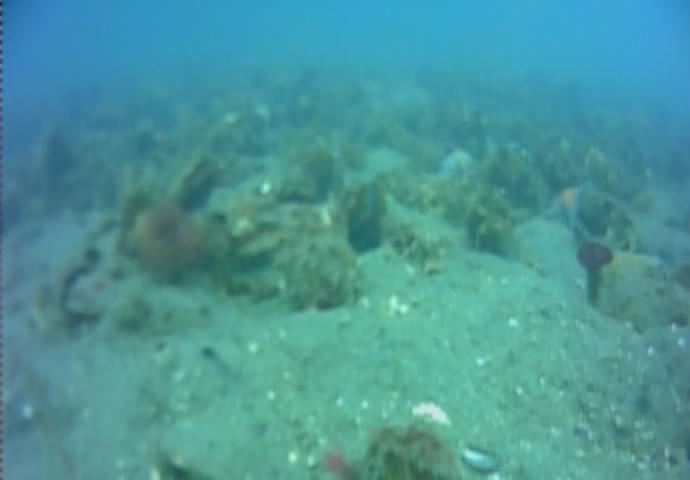 小名浜港魚市場前T字堤海底水中写真