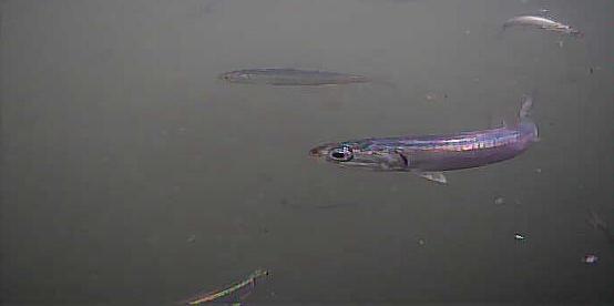 野島漁港 水中映像