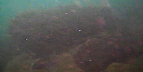 保田港 水中映像