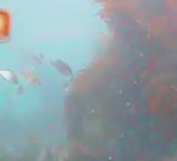 富浦港 水中写真04 海底壁面