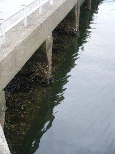 浮島つり園 水面