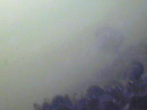 浮島つり園 水中写真02 メジナ クロダイ