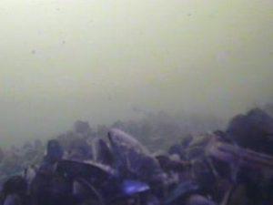 浮島つり園 水中写真09 海底