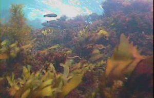 江奈高磯 水中写真03 美しい海底