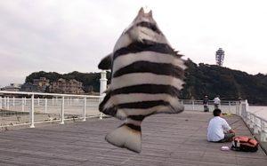 片瀬漁港 釣果 シマダイ02
