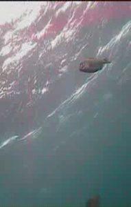 もずがね 水中写真01
