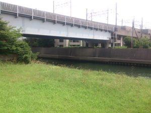 原木公園 橋脚裏の緑地