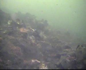 臨港パーク 水中写真01 海底