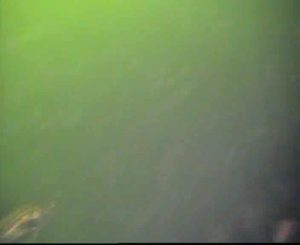 臨港パーク 水中写真03 スズキ
