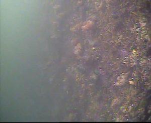 臨港パーク 水中写真02 側壁