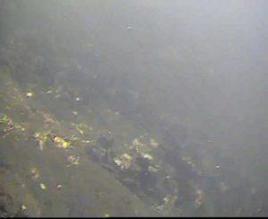 新港パーク 水中写真02 海底