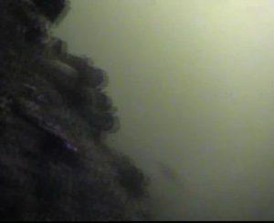 新港パーク 新港パーク 水中写真04 海底 岩場