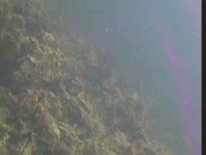 常滑港 水中写真01 海底