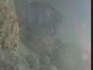 原港 水中写真04 海底