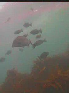 宝来島 水中写真02