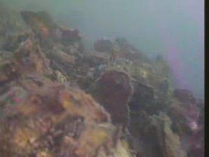 常滑港 水中写真02 海底