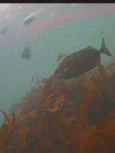 宝来島 水中写真01