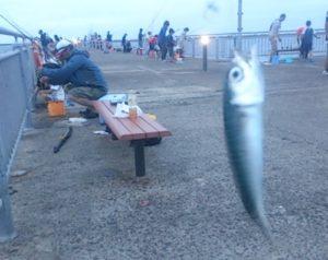 鹿島港魚釣園 釣果02 サバ