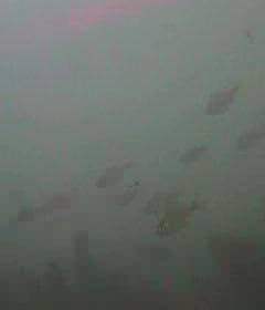 金谷漁港 水中写真04
