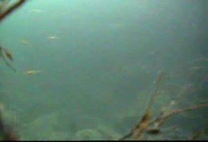 川下港 水中写真10