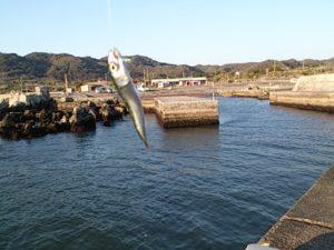根本港 釣果01