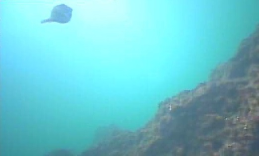 明鐘岬 水中写真08