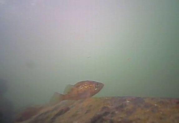野島公園 水中写真06