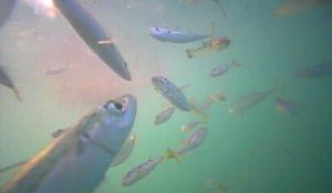 御宿岩和田漁港 水中写真01