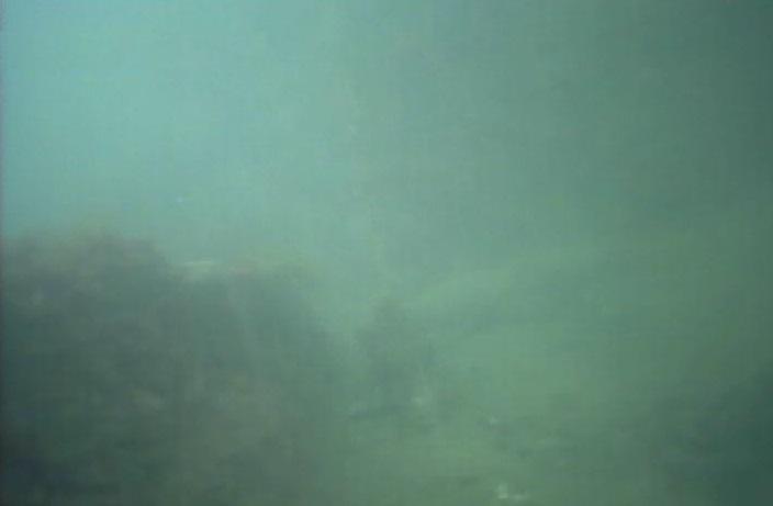 大津港 水中写真01